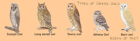 types of owls in Greece