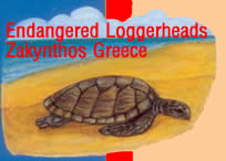 turtles are not treated properly on zakynthos